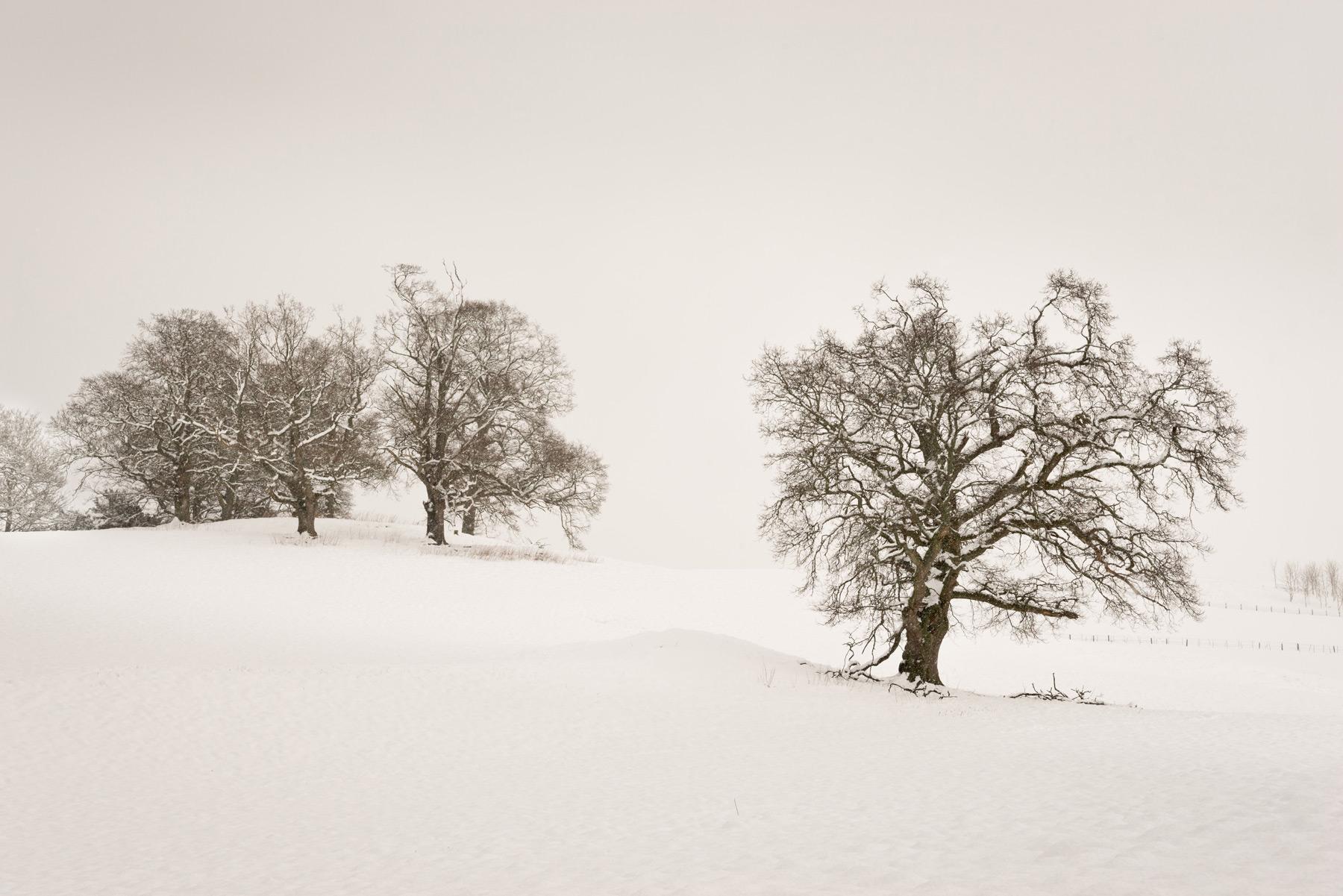 Alles ist Weiß, Crieff, Strathearn, Perthshire, Schottland