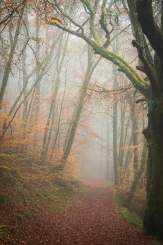 Herbstnebel, Comrie, Perthshire, Schottland