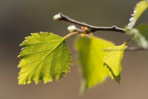 Frisches Grün Assynt Fotoreise 17