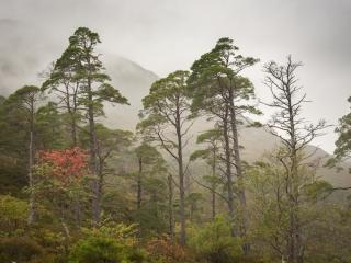 Kaledonischer Wald im Nebel