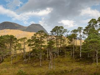 Beinn Alligin mit schottischen Kiefern
