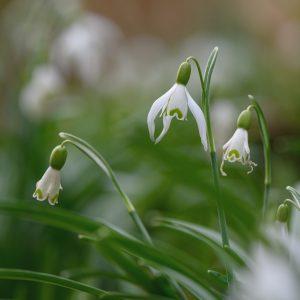 Blütenphasen